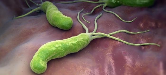 Спиралевидная бактерия Helicobacter pylori