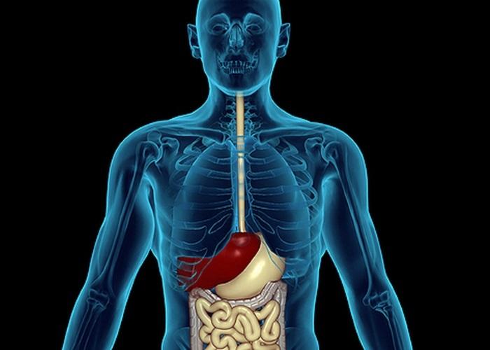 Слизистая пищевода до определенной степени способна противостоять повреждающему действию забрасываемого содержимого желудка
