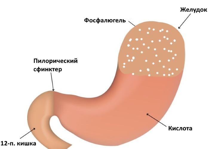 Фосфалюгель снижает активность пепсина